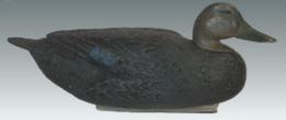 Black Duck | Decoys