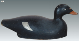 White-Winged Scoter | Decoys