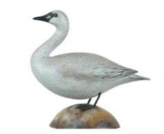 Whistling Swan | Decoys