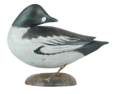 Goldeneye Drake | Decoys