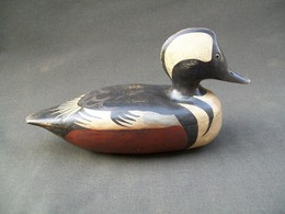 G 20f 20cranwill 20illinois 20river 20hooded 20merganser 20pekin 20illinois 20from 20right medium