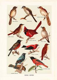 Birds large