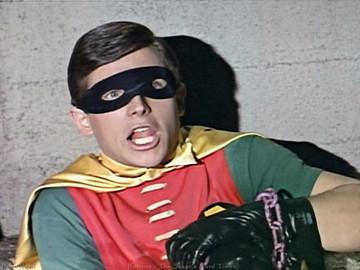 Robin large